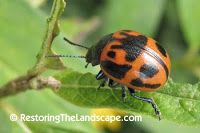 Restoring The Landscape With Native Plants: Milkweeds and Their Associated Insects