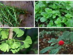 Tyto 4 bylinky mohou chránit váš mozek před Alzheimerovou chorobou, depresí, úzkostí a mnohem více