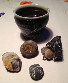 At studere sine fund, mens der drikkes en god kop kaffe, er råhygge for mig.  Stenen nederst til venstre er en brachiopode. Fundene er fra Knud Strand den 12. februar 2016.  Kaffekoppen er fremstillet af keramiker Ulf Nielsen, Bøjestræde, Faaborg.