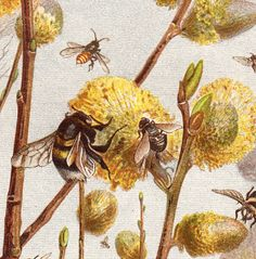 1890 Gorgeous  BEE fine chromolithograph, countryside Insects, original antique 122 years old print
