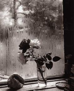 The Last Rose of Summer by Josef Sudek
