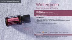 Here you can learn about doTERRA wintergreen essential oil uses with diffuser recipes. I explain all about wintergreen and all the ways you can use it. Doterra Wintergreen, Wintergreen Essential Oil, Best Essential Oils, Essential Oil Uses, Doterra Essential Oils, Doterra Wellness Advocate, Presentation Cards, Pure Oils, Oil Benefits