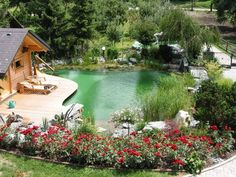of the pool uses plants to filter the water. Have a clean, beautiful pond for swimming without the maintenance and chemicals of a traditional pool. Swimming Pool Pond, Natural Swimming Ponds, Natural Pond, Swimming Pool Designs, Pond Water Features, Dream Pools, Patio, In Ground Pools, Cool Pools