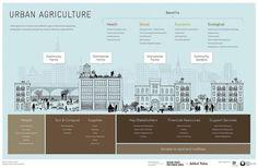 Agricultura urbana para ciudades más sostenibles