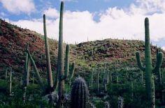Hermosillo, Mexico parte de su flora