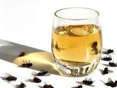 Helyezd el ezt az otthonodban és 1 órán belül eltűnnek a legyek, szúnyogok és a bogarak!