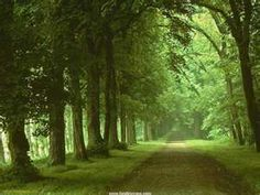 I'd love to journey down this road...... :) Rainforest Music, Tropical Houses, Harp, Nature Sounds, Relaxing Music, Beautiful Places, Green, Paths, World