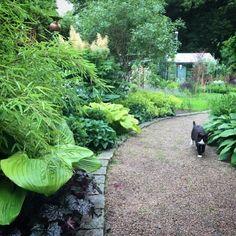 """43 gilla-markeringar, 3 kommentarer - Rörbäckens trädgård (@rorbackens_tradgard) på Instagram: """"Jag fortsätter på temat Frodig Grönska i väntan på att Rörbäckens trädgård ska erbjuda trevligare…"""""""