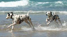 Come organizzare la giornata in spiaggia col cane
