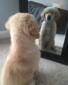 Mirror mirror on the wall who's the cutest puppy of them all