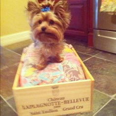 Wine Crate dog bed! Awww LOVE! I wonder if I could find a crate big enough for my pup