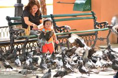 Discovering the Urban Wildlife...Merida, Yucatan, Mexico. Nikon D7000, zoom 200, opening 2;8