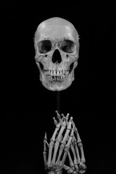 Skulls Bones :)
