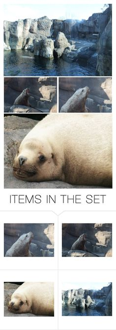 """The Sea Lion Habitat Was Next…Also Active & Playful, Sea Lions Are Known for Their Intelligence & Noisy Barking…Clowns of the Sea"" by maggie-johnston ❤ liked on Polyvore featuring art"