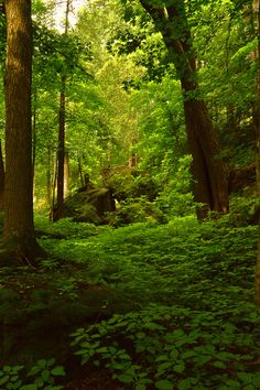 Forest Green, Ontario, Canada photo via just