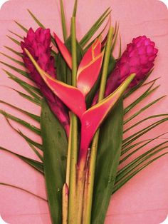 tropical flowers | Tumblr