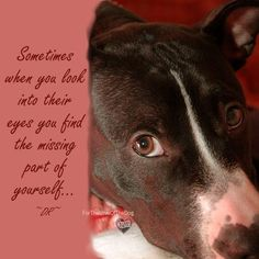 Look into their eyes   #dog #pet #quote  http://www.thedogsbark.com/