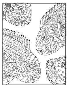 Under The Sea Peaceful And Free Printable Adult Coloring Pages Parrotfish Party Sheet Available On Etsy