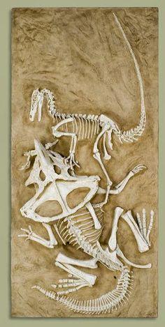 Velociraptor vs. Protoceratops - 'Fighting Dinosaurs' - Knowledge Sharing