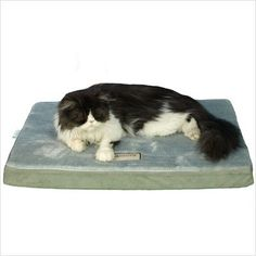 Armarkat Memory Foam Orthopedic Pet Bed Pad in Sage Green and Gray, 24-Inch by 18-Inch by 2-Inch « dogsiteworld.com