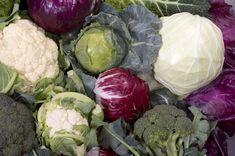 Prepare In July For Fall/Winter Vegetable Harvest | thegardengeeks