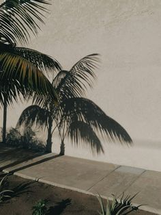 a muted palette - mishproductions: Oceanside, CA Henri Matisse, Aesthetic Photo, Strand, Summer Vibes, Palm Trees, Planting Flowers, Plant Leaves, Landscape, Instagram Posts