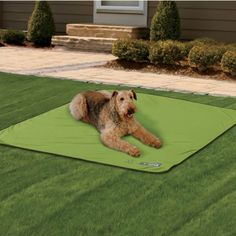 Insect Shield® Dog Blanket