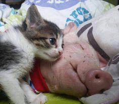 Nap time at www.Julianasfarm.org