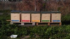 """Vom Samen bis zur Ernte: Bienen. Bereits Albert Einstein sagte angeblich: """"Wenn die Bienen..."""