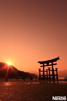 画像F 世界遺産 夕日とのマッチングがいいですね!宮島 大島居です。