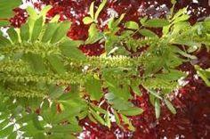 complementair: Dit kun je zien doordat zowel de groene als de rode bladeren versterkt worden door elkaar, dit komt doordat ze tegenover elkaar staan op de kleurencirkel.