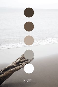 Brown color palette inspired by nature. Photo taken on Olowalu Beach in Maui Hawaii. Palette Design, Nature Color Palette, Colour Pallette, Colour Schemes, Color Combos, Brown Color Palettes, Creation Image, Colour Board, Modern Colors