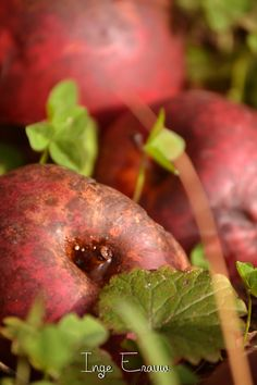 automne - www.meflatot.com Apple, Fruit, Fall Season, Bedroom, Apples