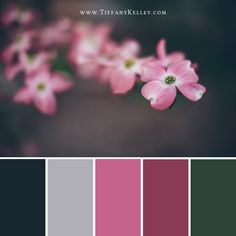 Color Palettes » Tiffany Kelley Photography & Design