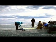 Ловля рыбы сетями зимой.   Подледная рыбалка.