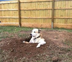 He loves digging holes... and then sitting in them and staring at everybody