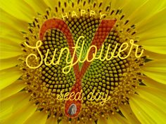 Sunflower Seed Day
