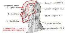 デルマトームの図
