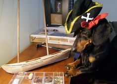 Packing for Bahamas Sailing Trip With Crusoe the Dachshund
