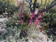 Desert Plants | desert flowers