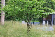 Grillige meerstammige Carpinus betulus - ideaal in kleine tuinen. Sfeer op ooghoogte www.jeroenhamers.nl