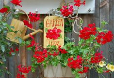 My Painted Garden: Geraniums Here- There - Everywhere