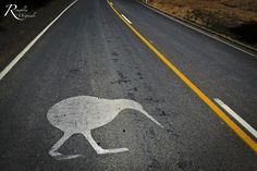 Kiwi Crossing! Russell, Bay of Islands, New Zealand