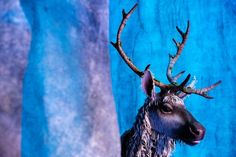 """How a onetime acrobat and a """"Lion King"""" puppet designer brought a speechless reindeer to life in Disney's stage adaptation of """"Frozen"""" on Broadway. Frozen On Broadway, Frozen Musical, Secret Life, The Secret, Sven Frozen, Theatre Makeup, Ny Times, Puppets, Reindeer"""