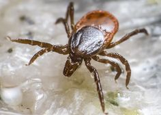 Be Very Afraid of Ticks  The threat of tick-borne diseases is serious and growing. And you're probably not doing enough to protect your family.