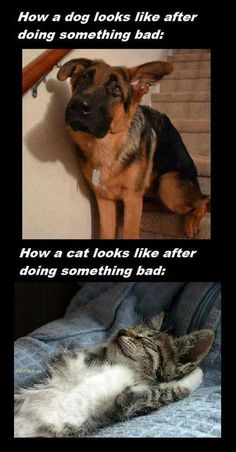 Clear Difference Between Dogs And Cats #lol #haha #funny