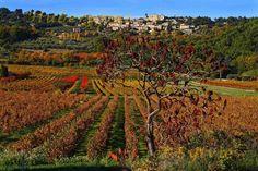 Vineyards close to Crestet, Vaucluse