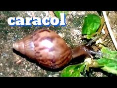 Mata Mosquito, Plantar, Snail, Youtube, Garden, Nature, Animals, Veneno, Small Vegetable Gardens
