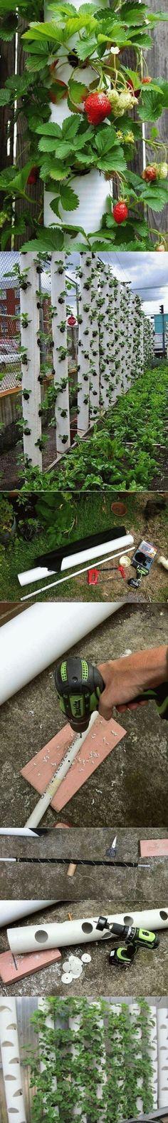 DIY vertical strawberry garden using PVC pipe #hydroponicgardening