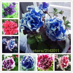 100 개/가방 블루 피튜니아 씨앗, 꽃 피튜니아, 아름다운 분재 꽃 씨앗, 자연 성장 피튜니아 공장 냄비 홈 정원
